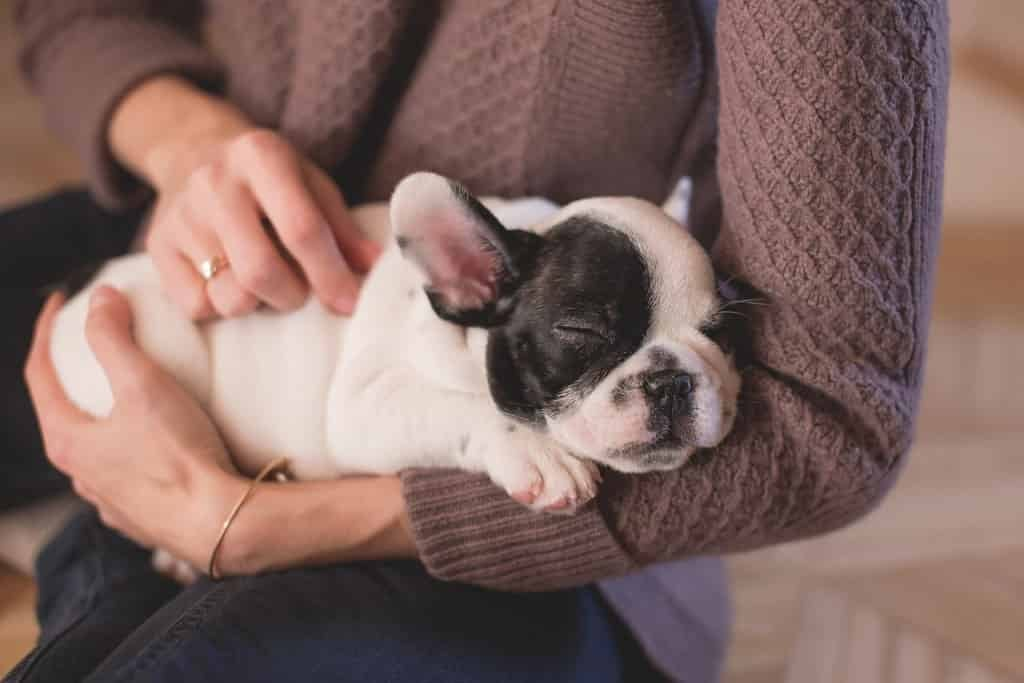 11-affordable-products-your-dog-needs2